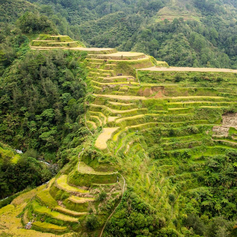 Arrozales de Banaue - Viaje de 10 días aventura por Filipinas