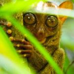 Santuario de los tarsiers de la isla de Bohol