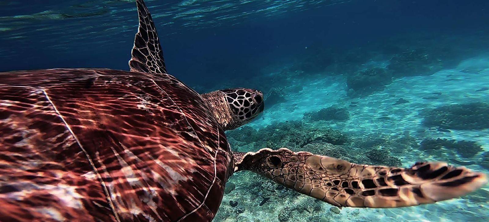Nadar con tortugas en la isla de Negros con Woola Filipinas