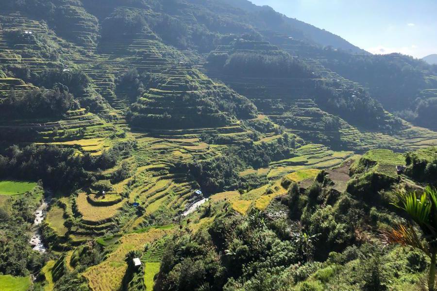 Terrazas de arroz de Filipinas