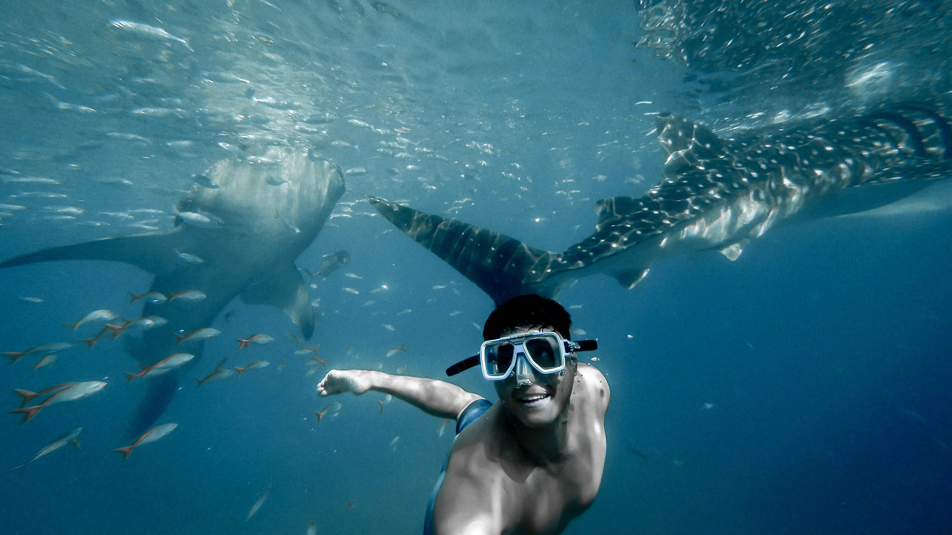 chico nadando con el tiburón ballena en Donsol