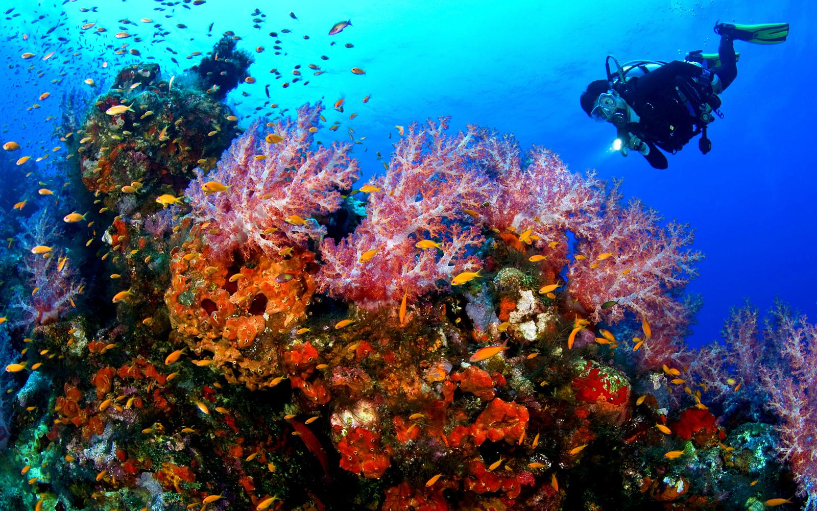 Buceo en Filipinas - por que viajar a Filipinas